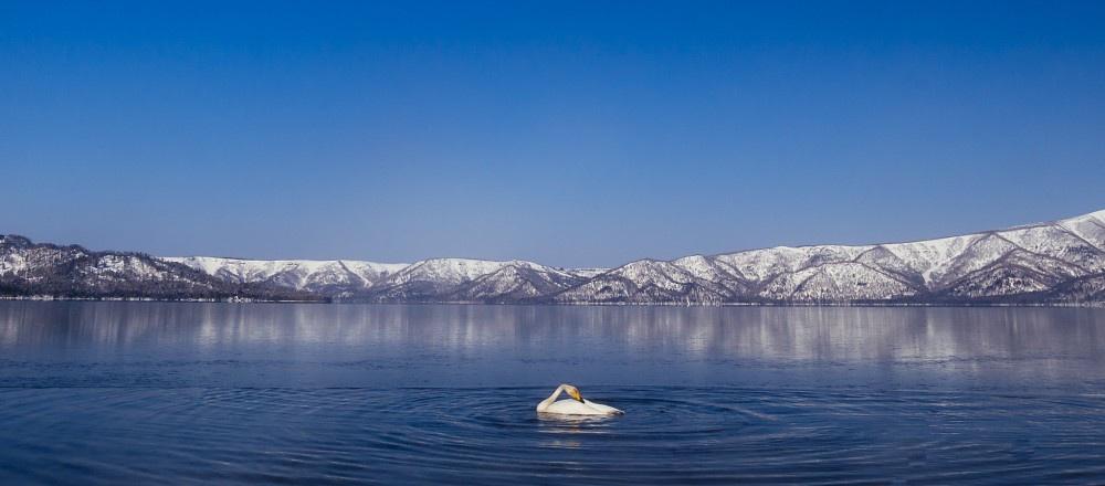 Swan in Kussharo-ko Lake