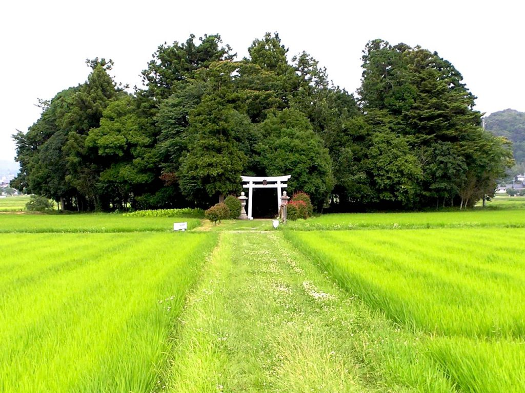 Shrine on the ricefields