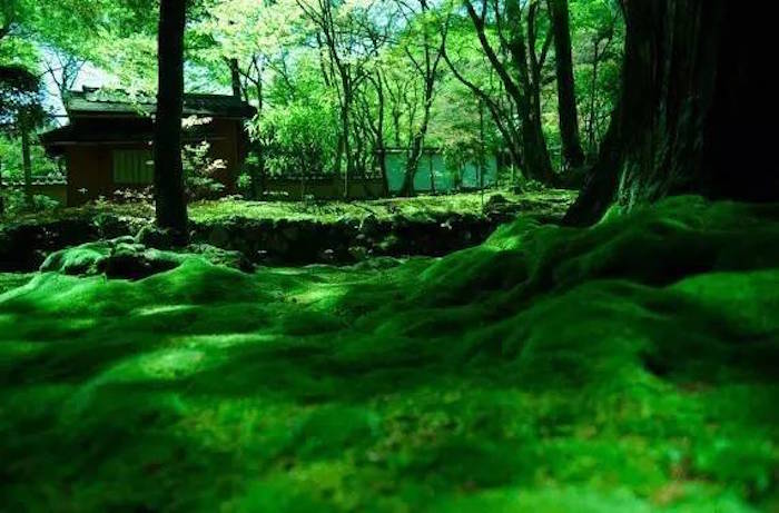 The Moss Garden in ythe Saiho-ji Temple aka Moss Garden in Kyoto, Japan